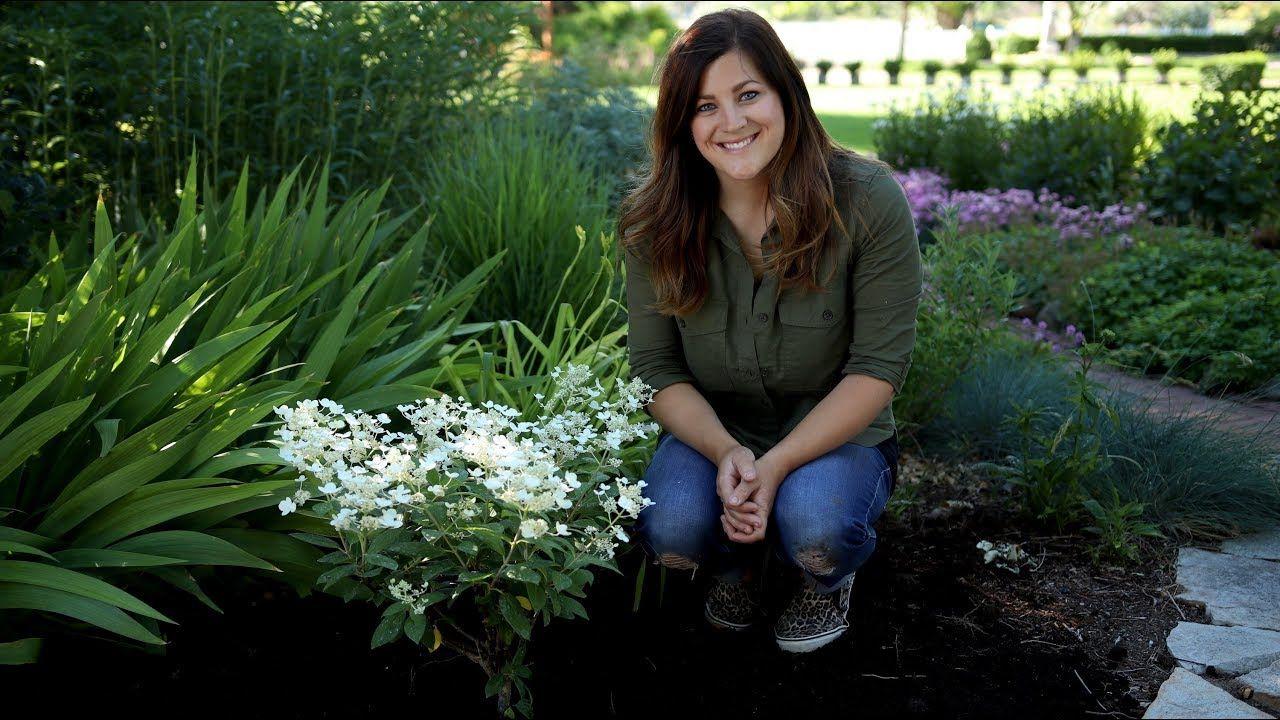 Planting a Hydrangea // Garden Answer YouTube