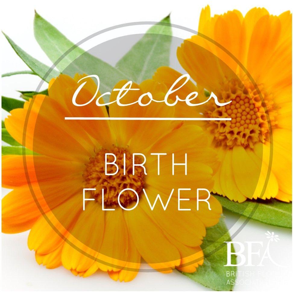 October Birth Flower Images For Desktop October Birth Flower