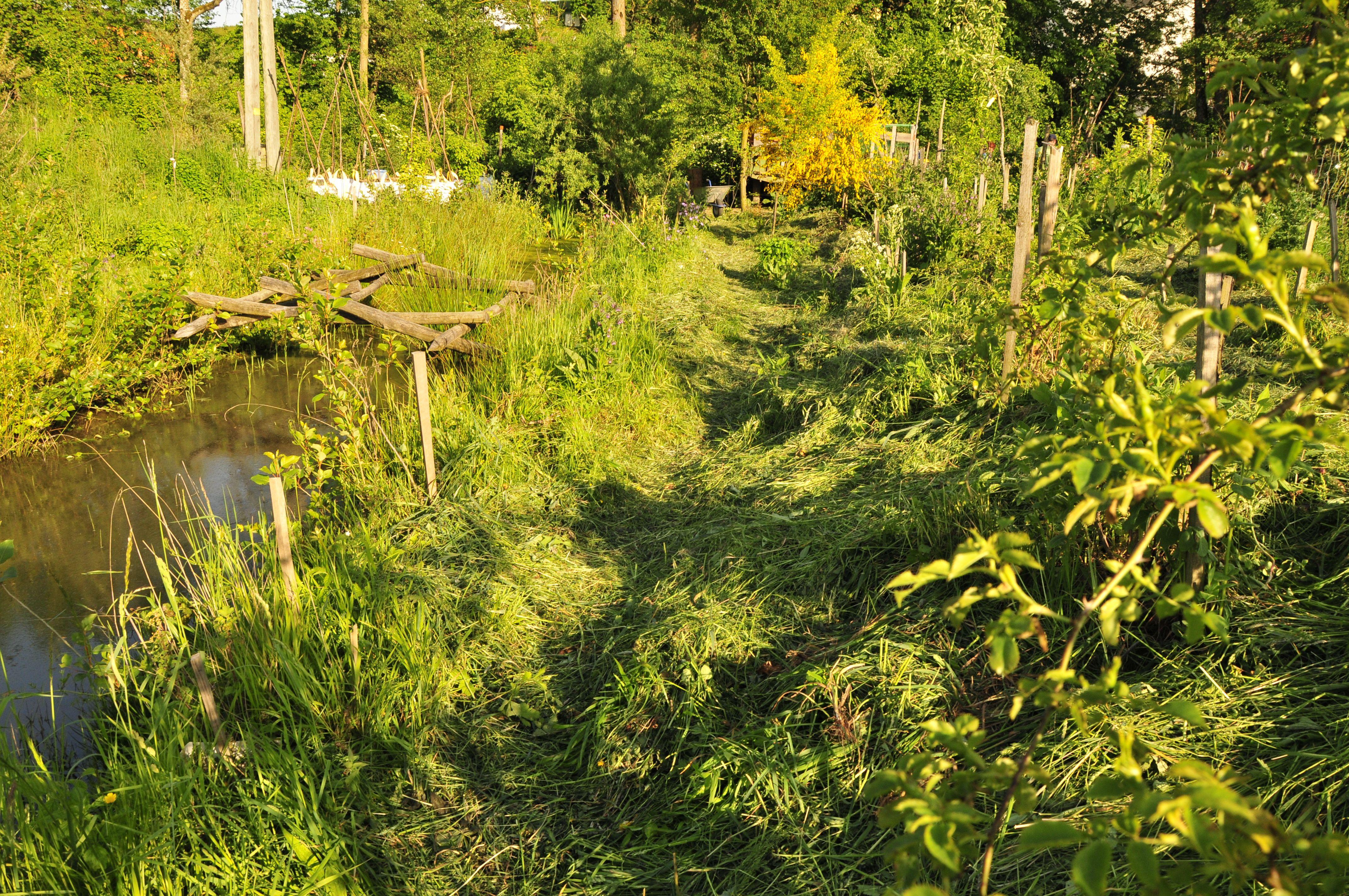 Frisch Gemulchter Wald Wassergarten Wassergarten Garten Permakultur