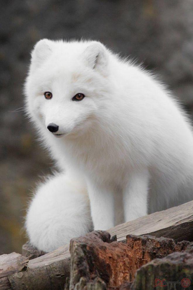 запада картинки про белый цвет отогнала пса