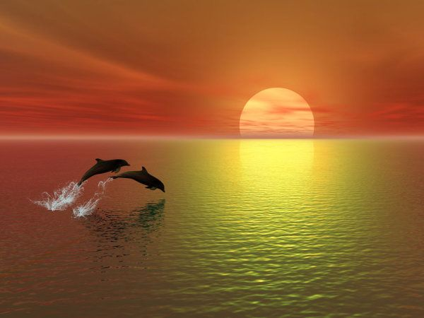 Dolphin in the Sunset Scenery | jump; dolphins; sea ...