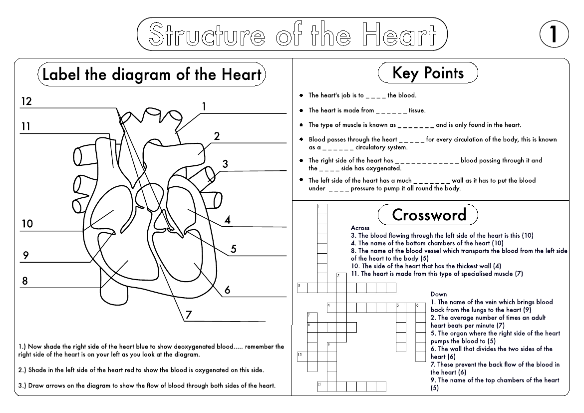 Gcse Biology Heart Structure Worksheet Pack With Images