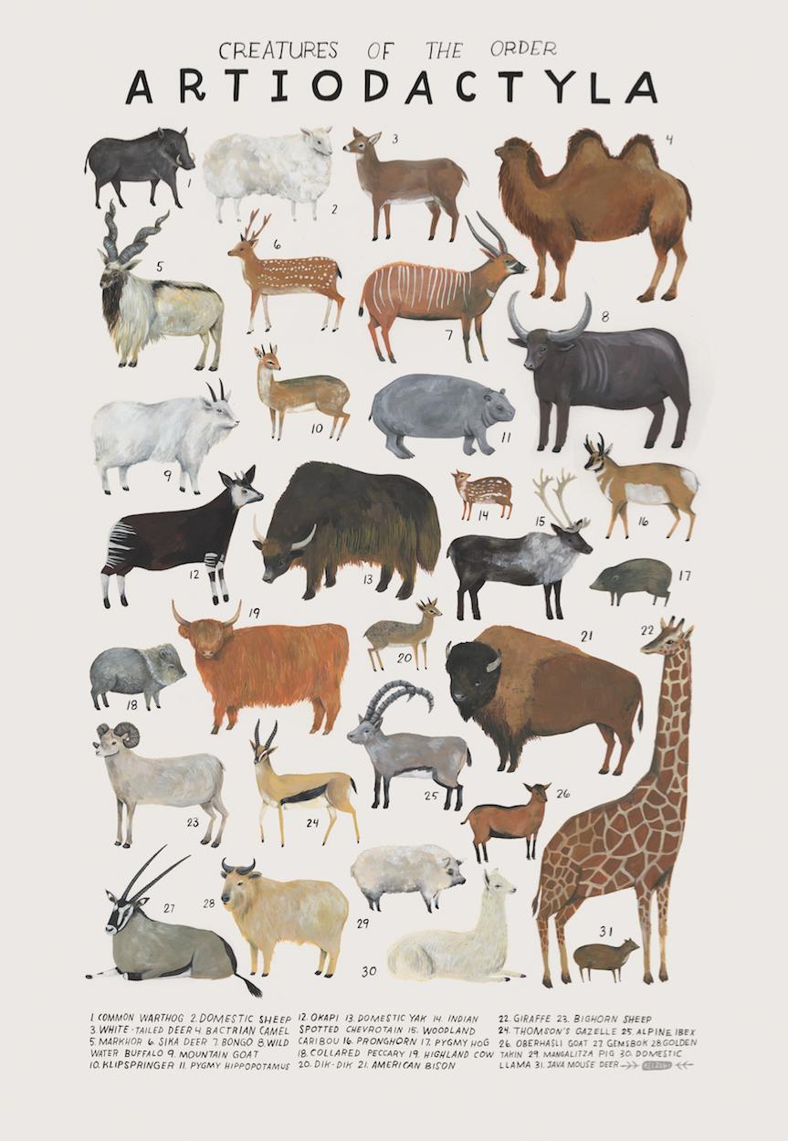 Artiodactyla print | Animals | Pinterest | Biología, Flores de iris ...