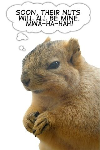 Your Nuts Squirrel Funny Squirrel Pictures Squirrel Memes