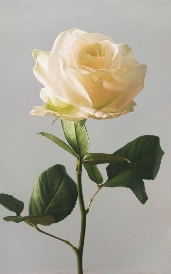 Hyper-Realistic Painting of a Rose ~ by Avier Arizabalo ...
