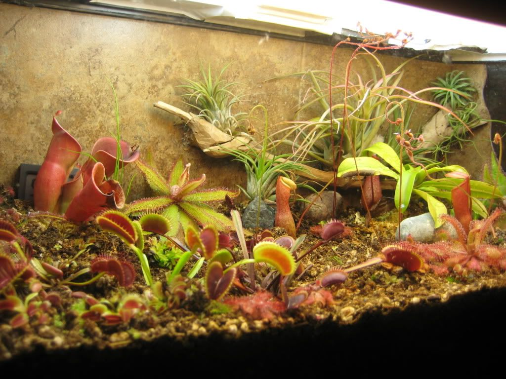 carnivorous plant terrarium terrarium pinterest. Black Bedroom Furniture Sets. Home Design Ideas