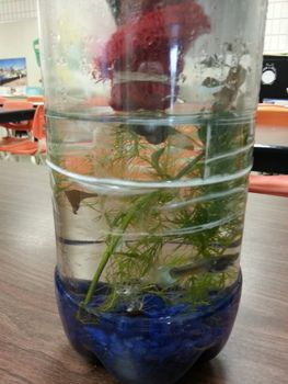 Biology Ecosystem In A Bottle Student Activity Ecosystem In A