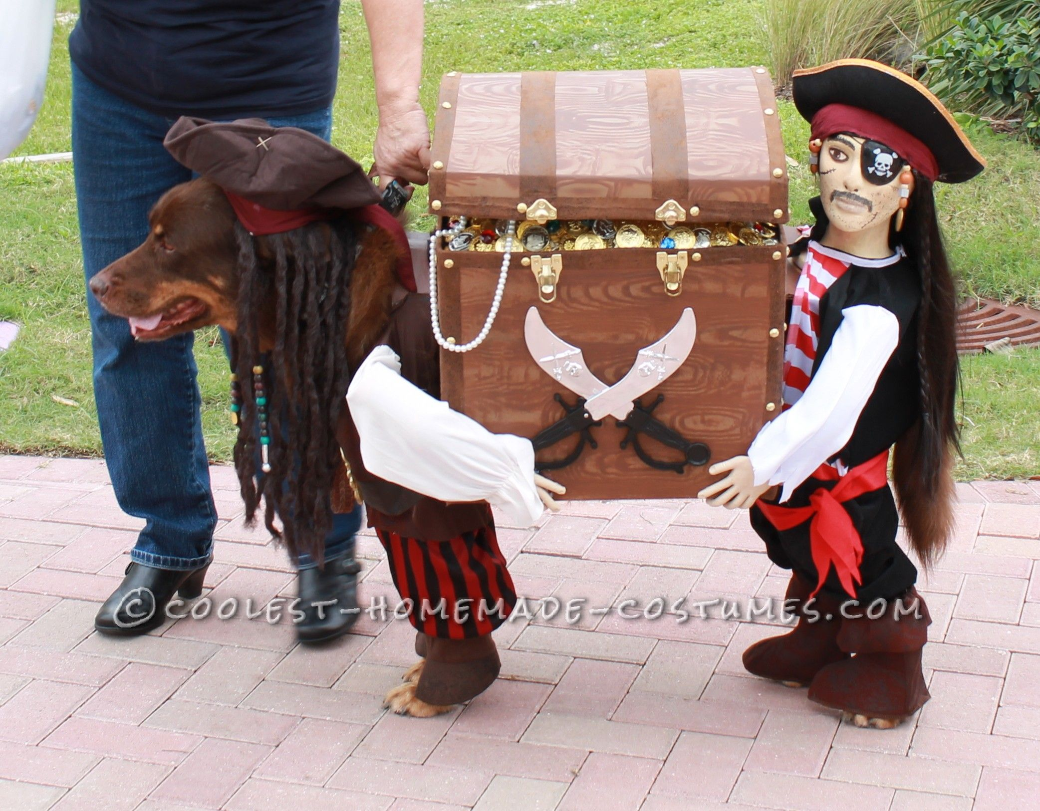 Best Homemade Dog Pirate Costume | Dog pirate costume ...