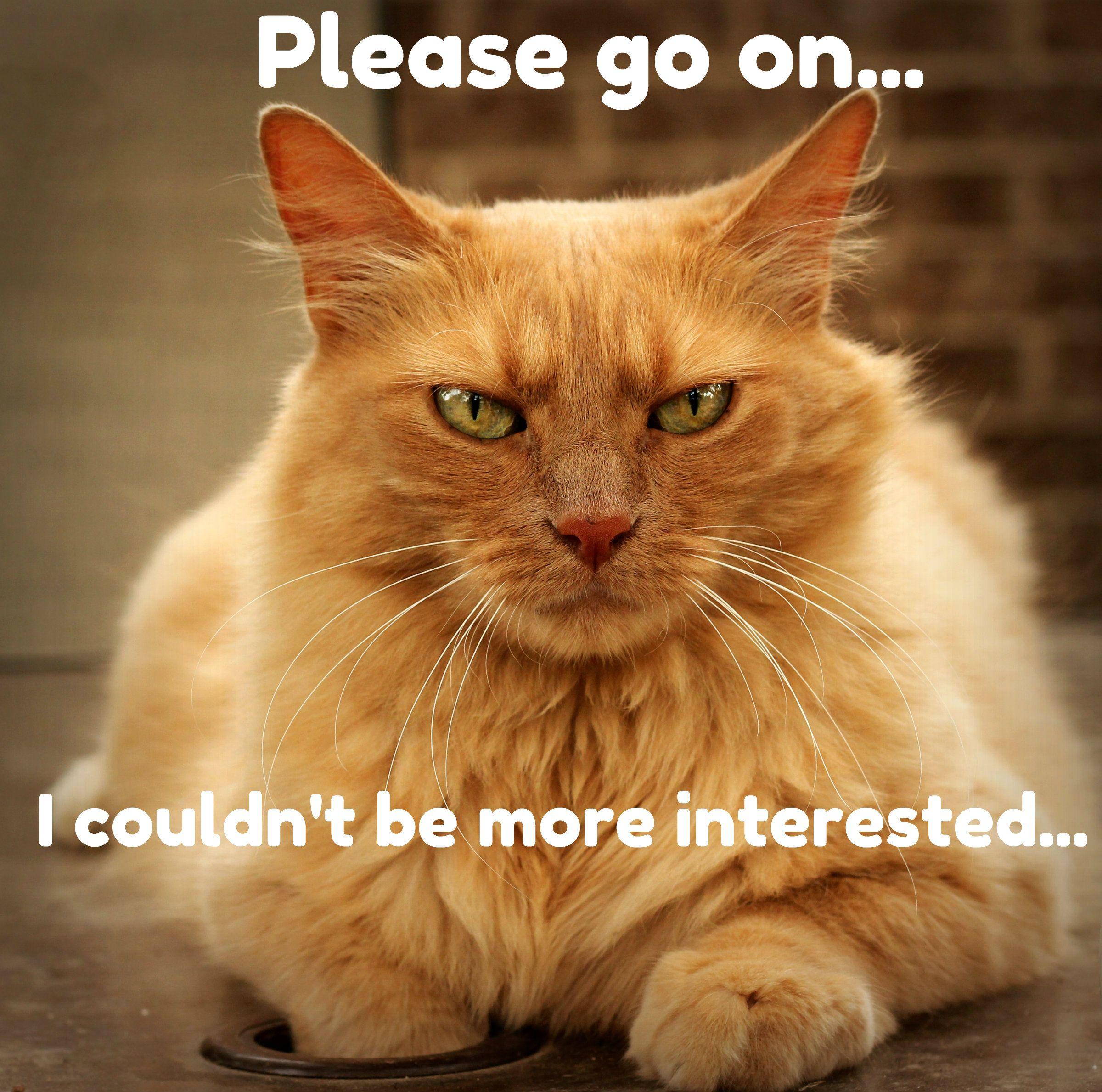Please go on... Cat memes, Cat pics, Cute animals