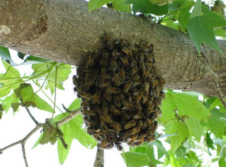 How To Get Rid Of A Beehive Bee Hive How To Get Rid Rid