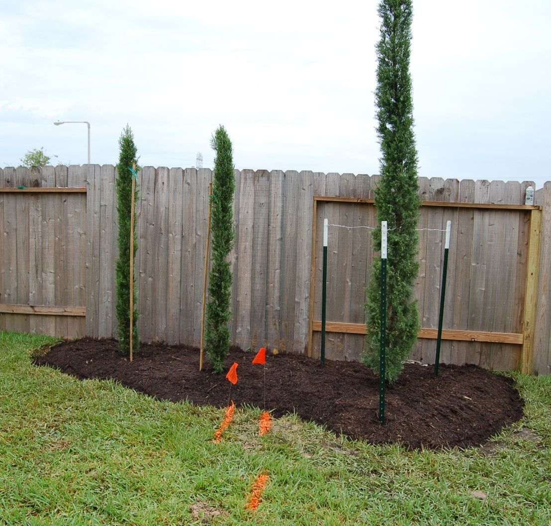 Tuscan House Style With Front Walkway And Italian Cypress: Italian Cypress Trees Garden Border