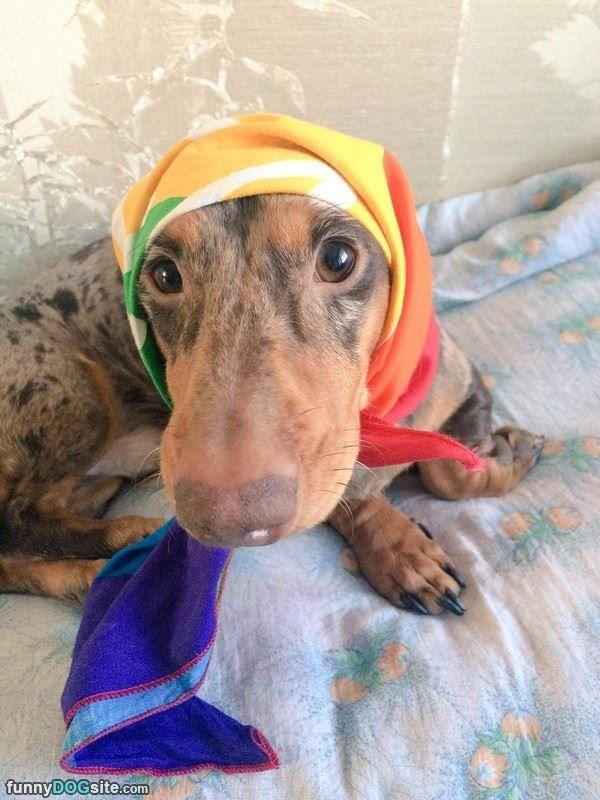 Babtcha Dog - http://www.funnydogsite.com/pictures/Babtcha_Dog9400.htm?utm_source=rss&utm_medium=Sendible&utm_campaign=RSS