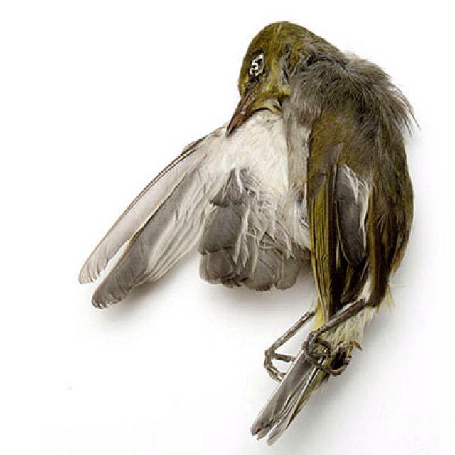 Julia Deville Bird Drawings Bird Art Vulture Culture