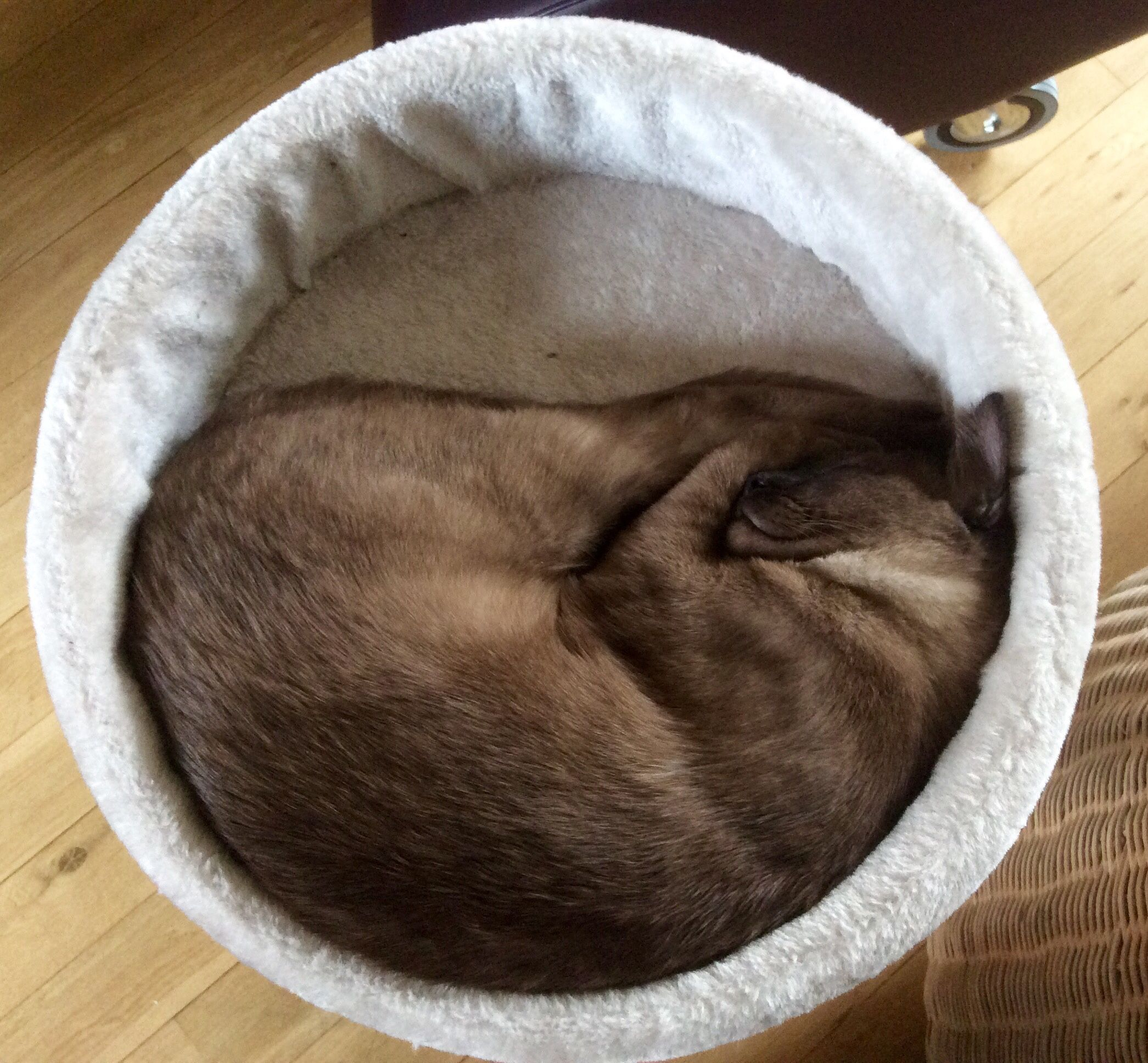 Filipek Cats