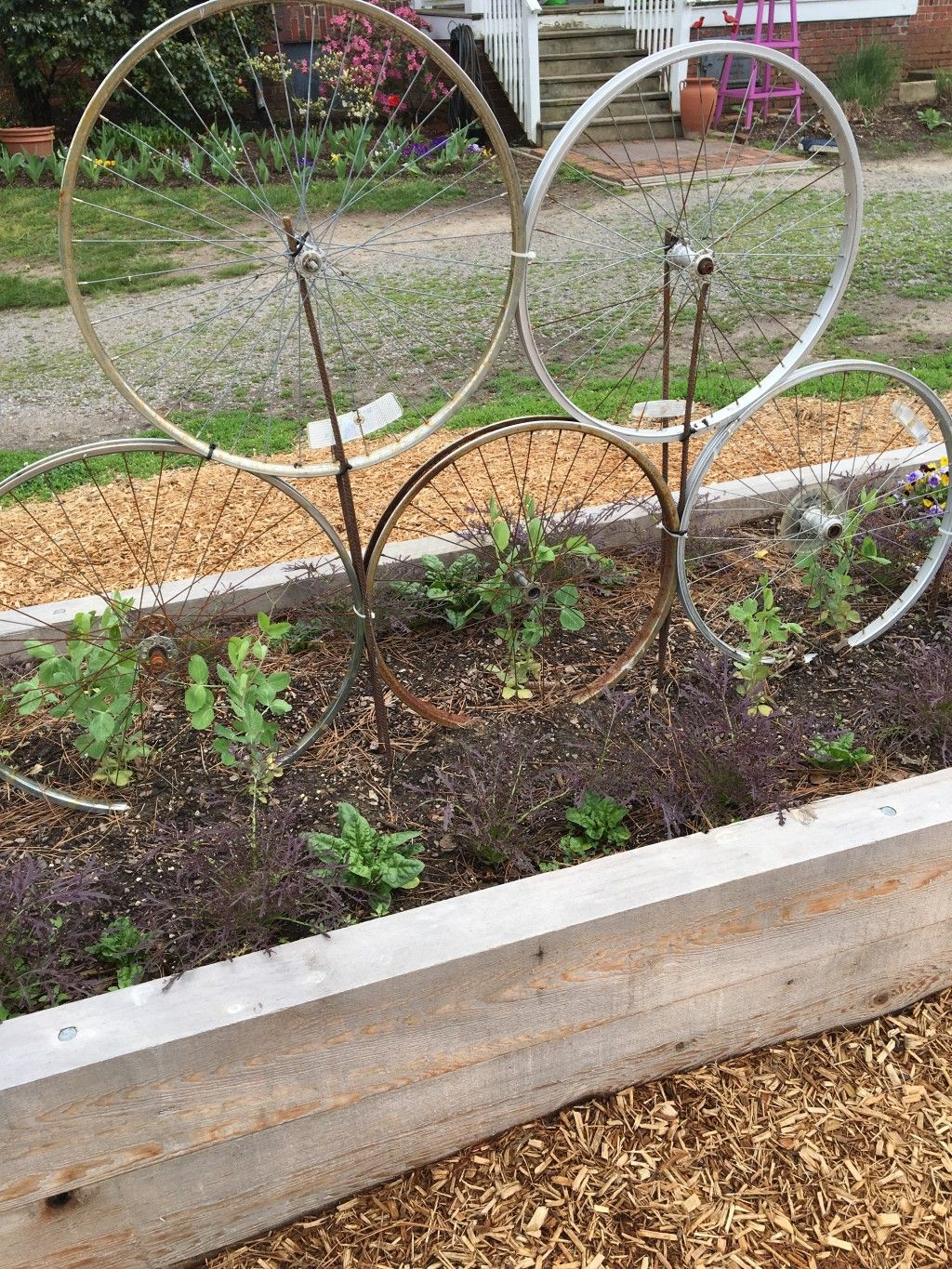 I really like these Vegetable garden pictures taken at the ...