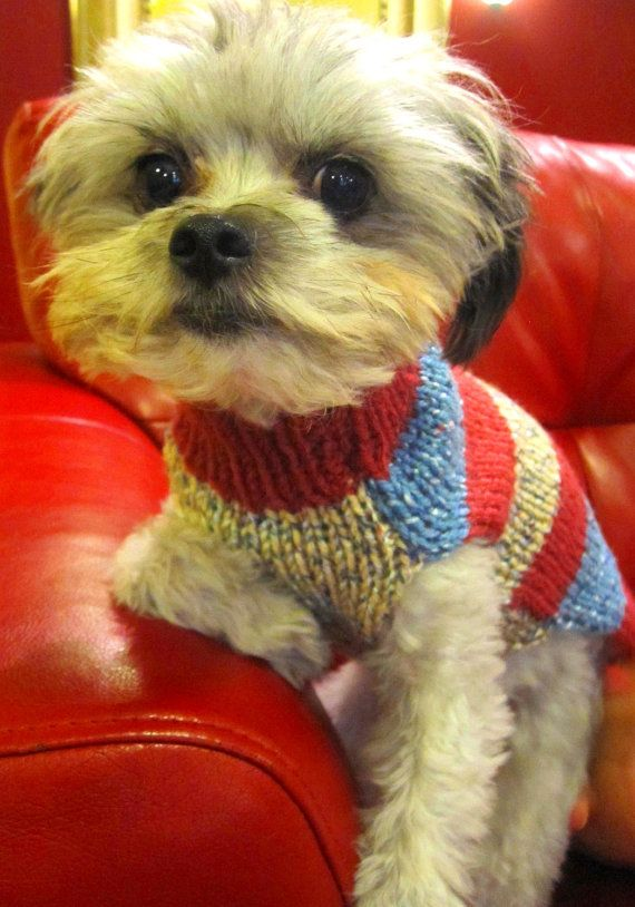 Long dog sweater,READY TO SHIP/daschund sweater/pink dog