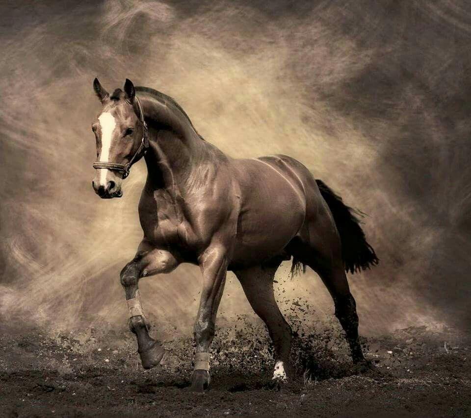 Epingle Par Maddy Sur Horses Hoofbeats Fond Ecran Cheval Cheval Photos De Chevaux