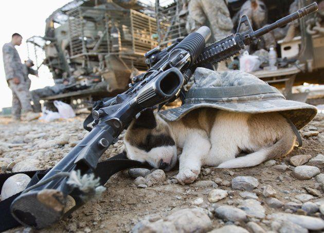 Yahoo Military Dogs Sleeping Animals War Dogs