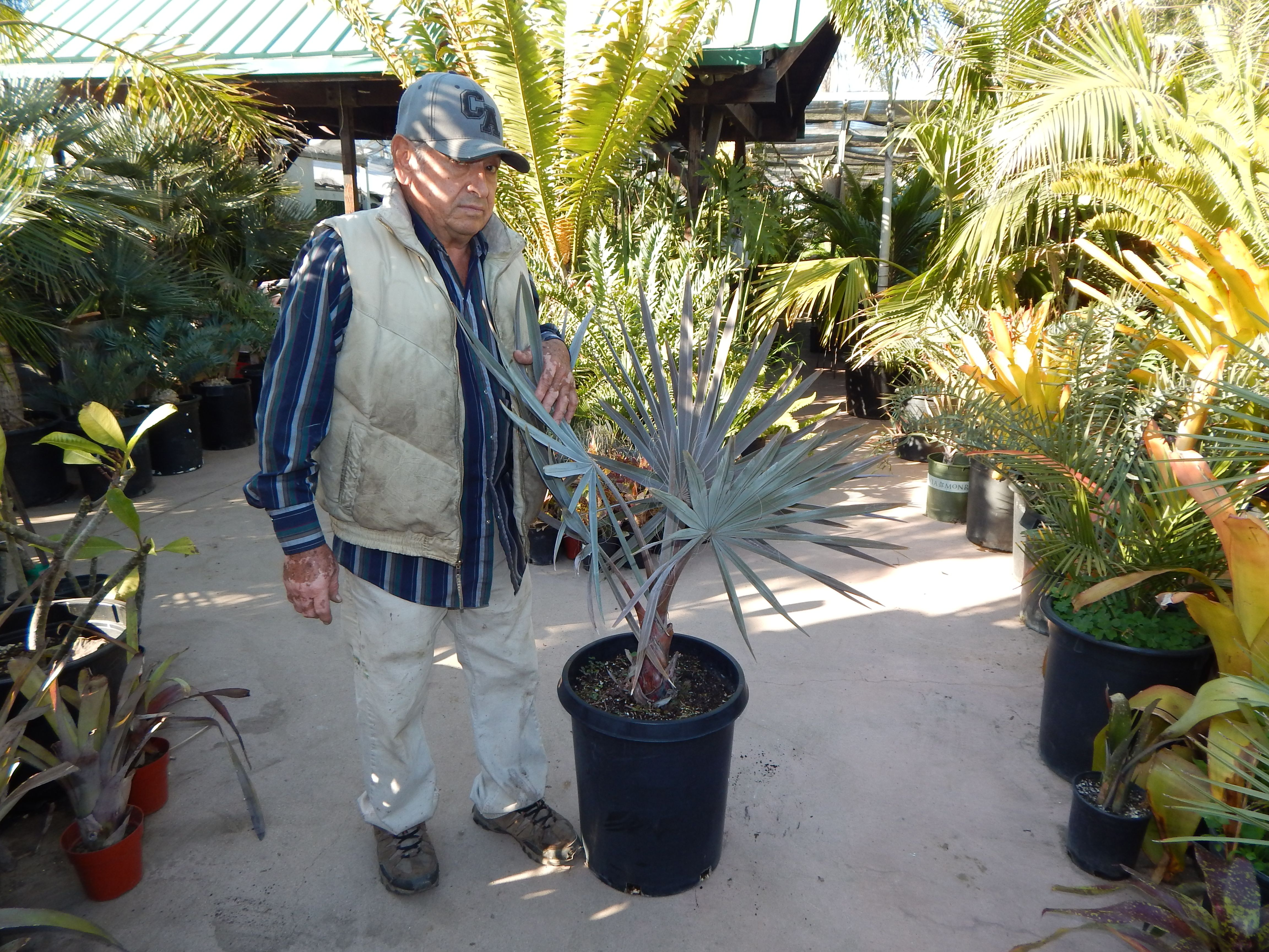15 gallon plant at nursery in 2020 plants tropical