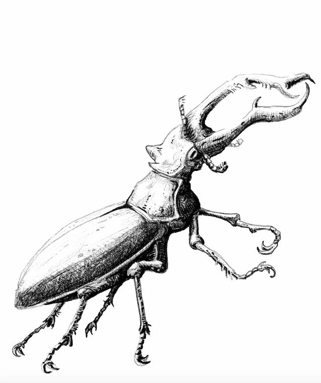 Stag Beetle Illustration Drawing Hirschkafer Zeichnung All Rights Reserved By Von Erika Hirschkafer Insektenkunst Augenmalerei