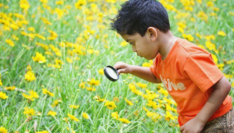 environmental education jobs florida