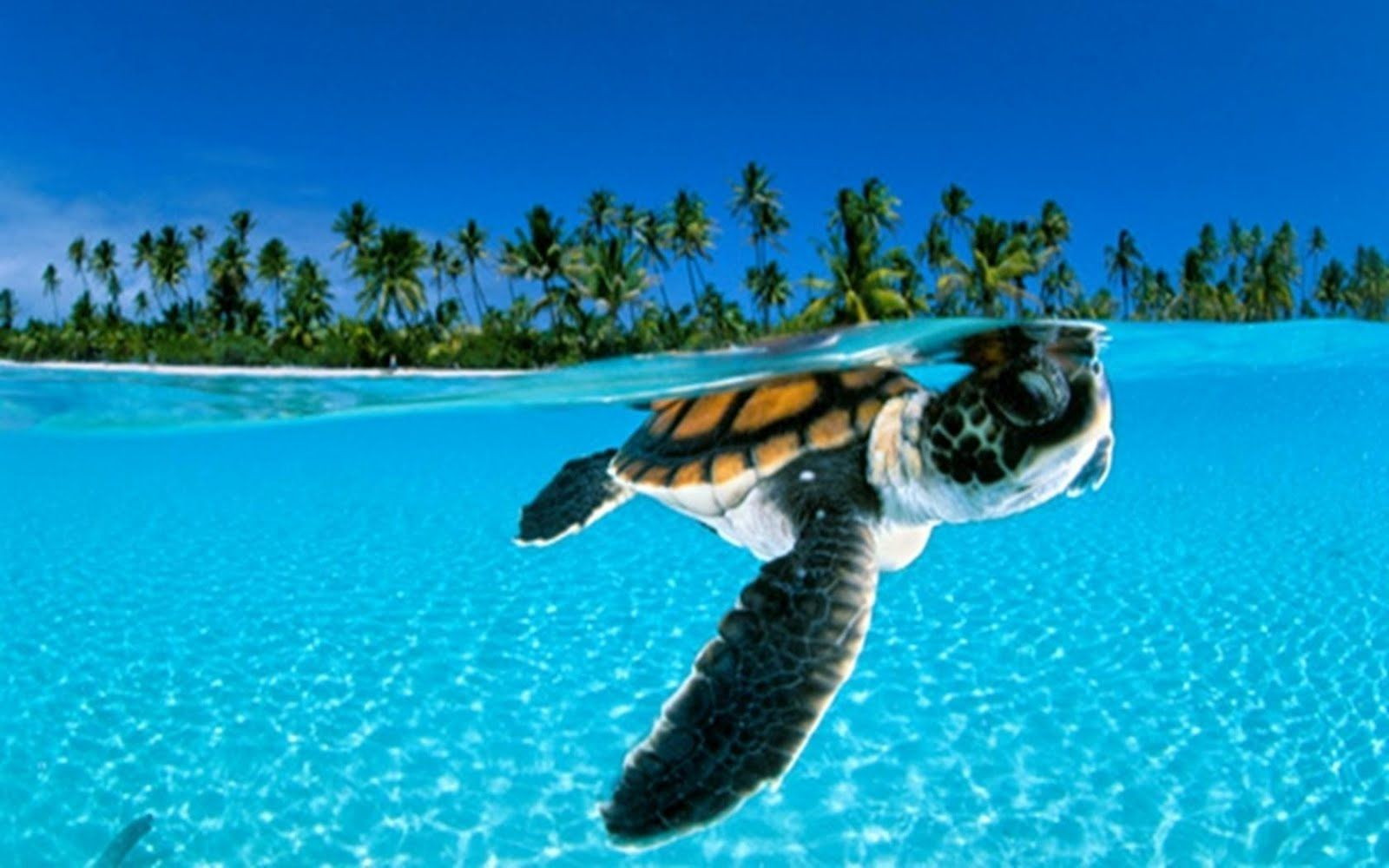 Underwater World Turtle Fondos De Pantalla Pinterest