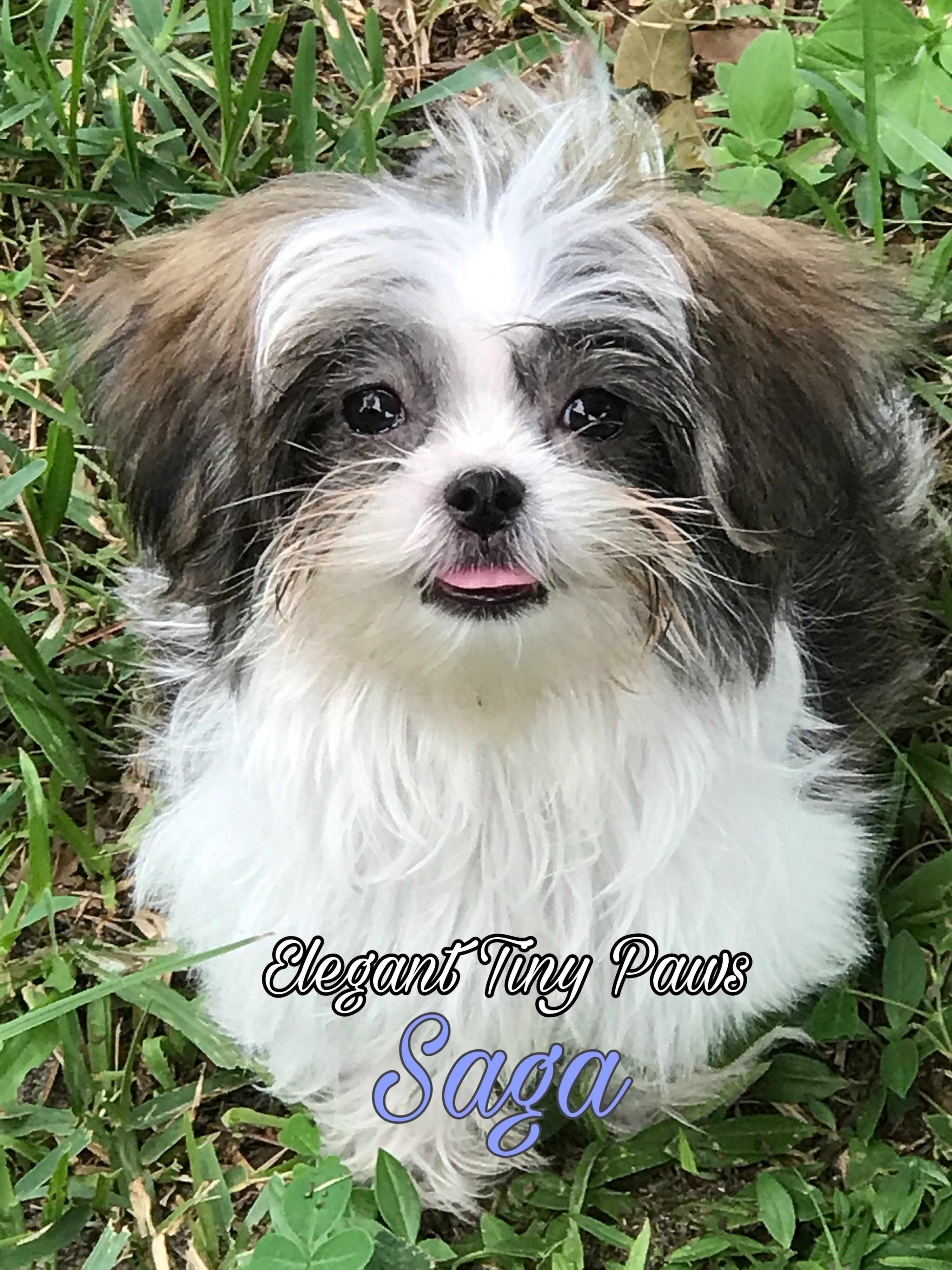 MiKi puppy Puppies, Animals, Dogs