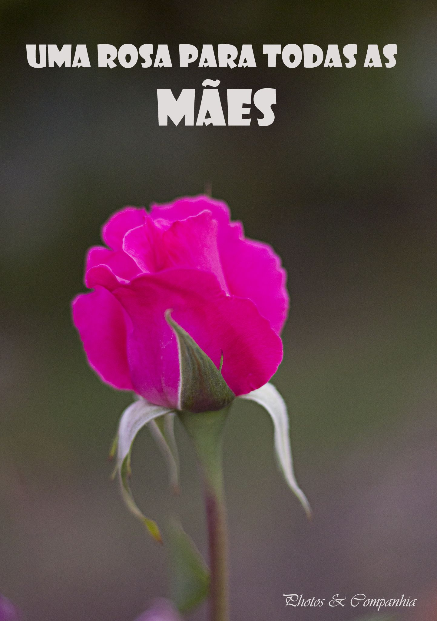 Rosa Dia Da Mae Com Imagens Frases Dia Da Mae Feliz Dia Das