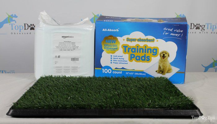 Best Puppy Potty Training Pads Comparison Test All Absorb Vs Paw Puppy Potty Trainer Vs Amazonbasics Dog Pee Pads Potty Training Puppy Training Pads