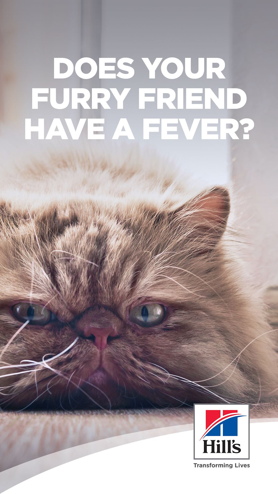 How to tell if your cat has a fever in 2020 Cat care