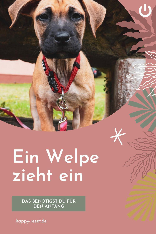 Erstausstattung Fur Welpen In 2020 Welpen Knutschkugel Kleine Hunde