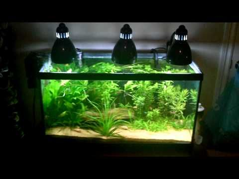Clip On Lamp Aquarium Lighting Youtube Aquarium Lighting Led Shop Lights Best Led Grow Lights
