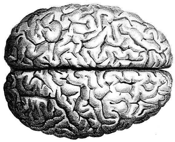 The human brain, Human Anatomy, the human skull, Old medical atlas ...