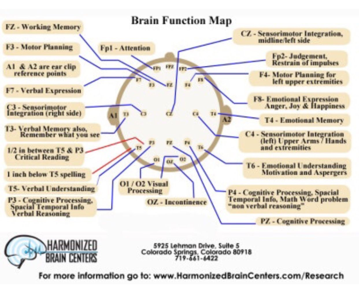 Pin By Allyson Chong On Health Brian Function Cranial