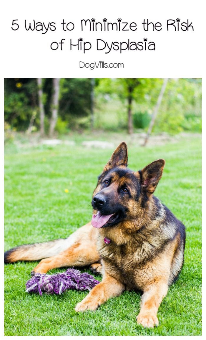 5 Ways to Minimize the Risk of Hip Dysplasia in Dogs Hip