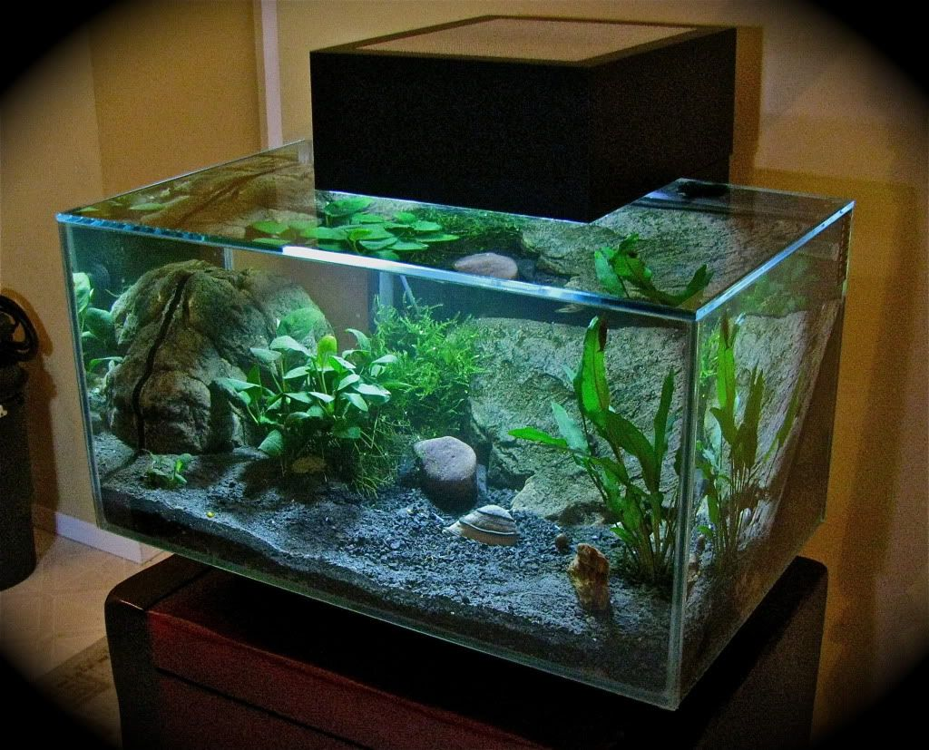 Small nano aquarium fish tank tropical - Nano Aquariums Have Become Incrasingly Popular Items In The Home Here Are Just A Few Aquariums That Are A Bit Different From Your Traditional Aquarium