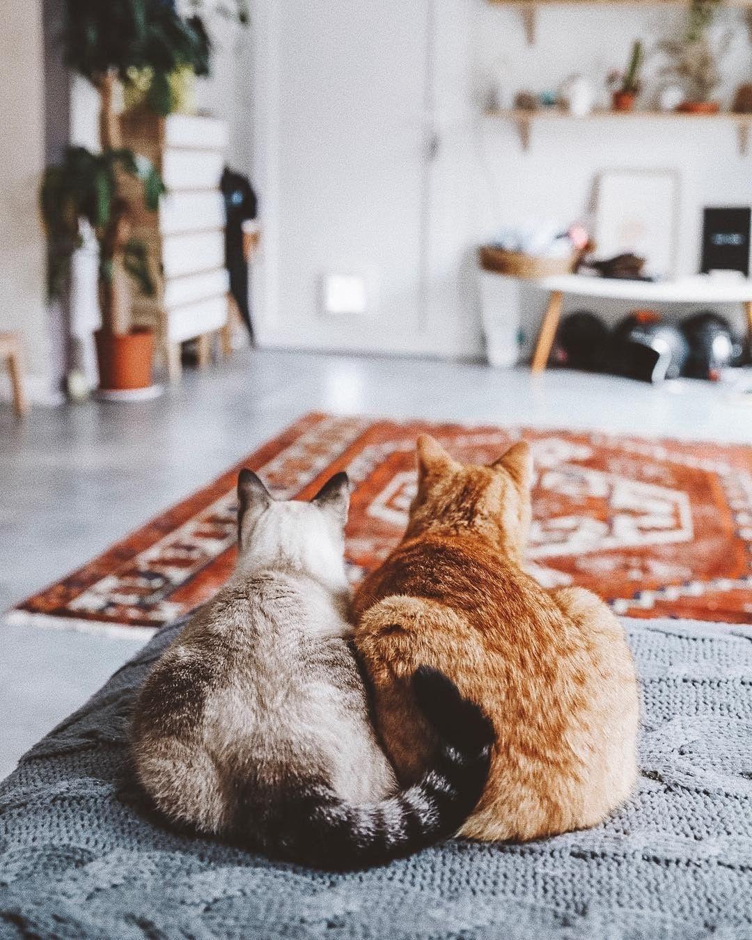 Pin Ot Polzovatelya Kateee Na Doske In Love With Cats