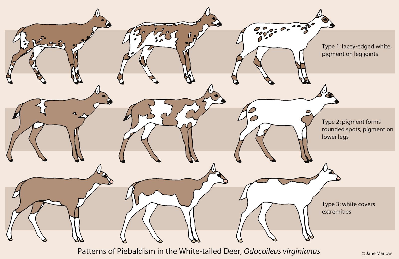 Related Image Deer Farm Deer Melanistic