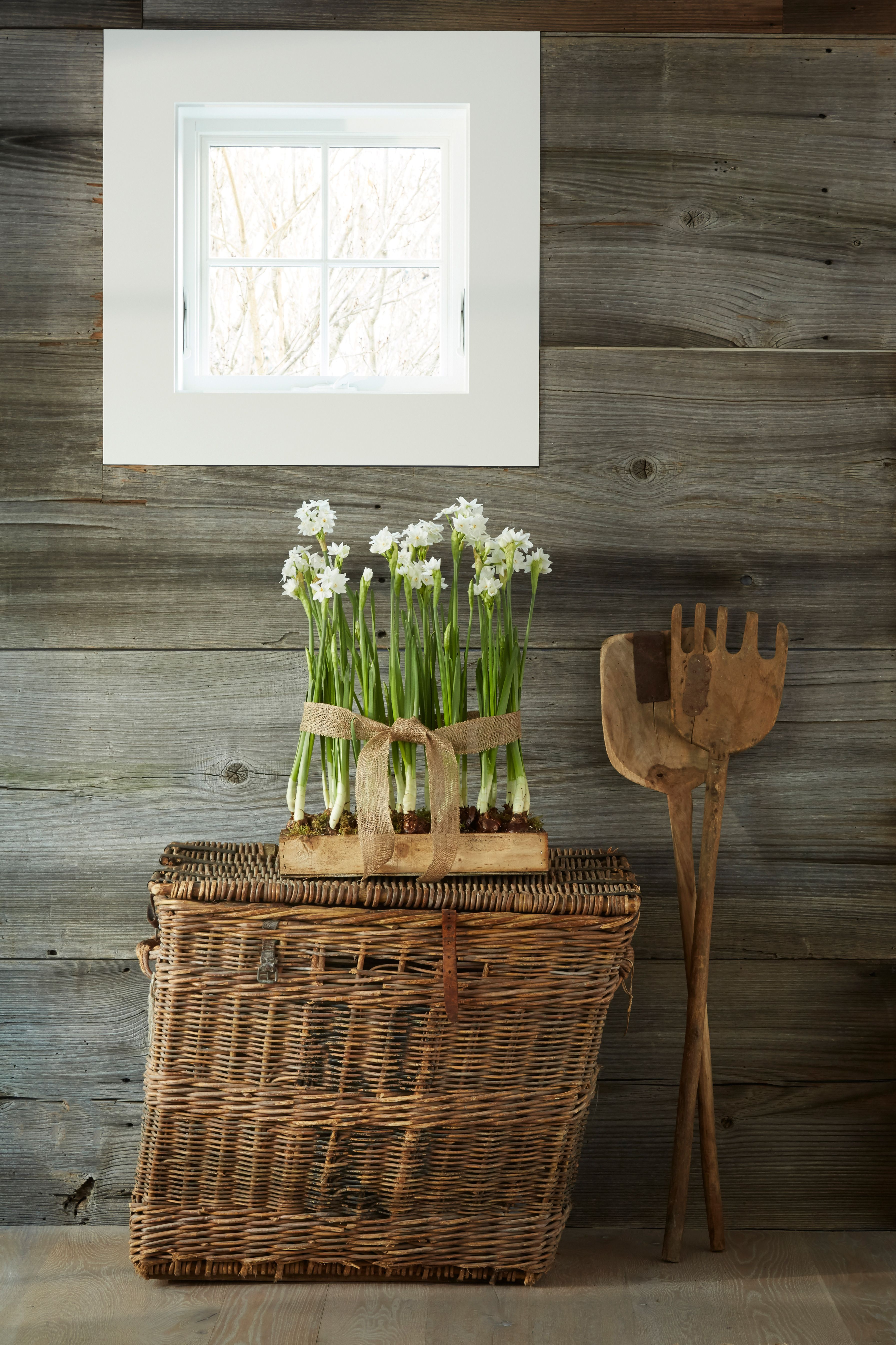 Step Inside GrayBarns on the Silvermine River. Basket