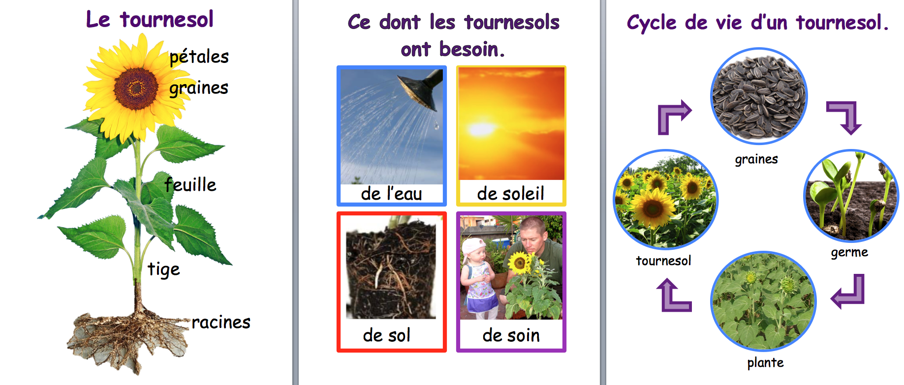 Sunflower Inquiry Resources In French