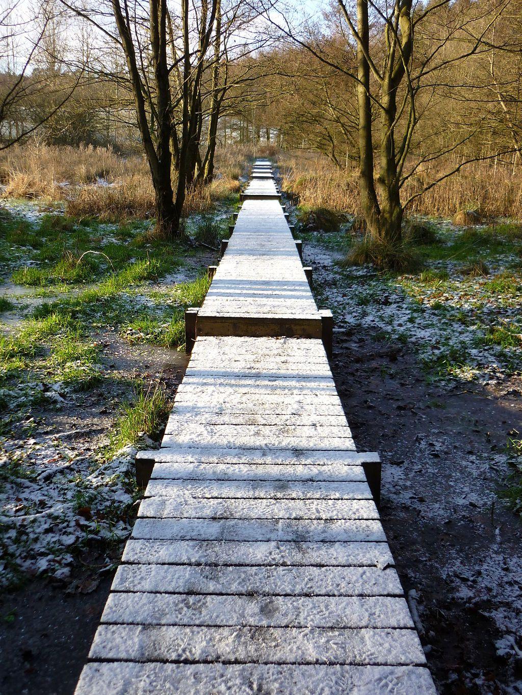 Crossing The Muddy Bit By Shirley Brook Raised Wood Walkway Over