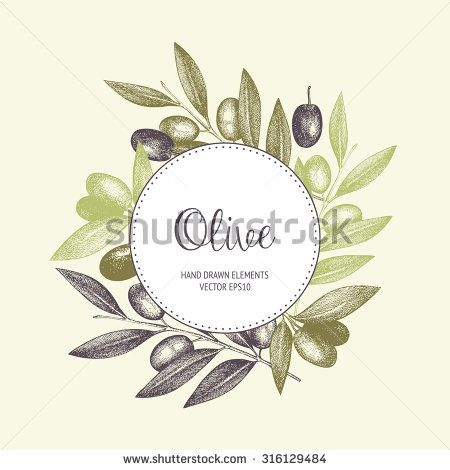 Vector design with ink hand drawn olive tree twigs. Vintage olive background in pastel colors.
