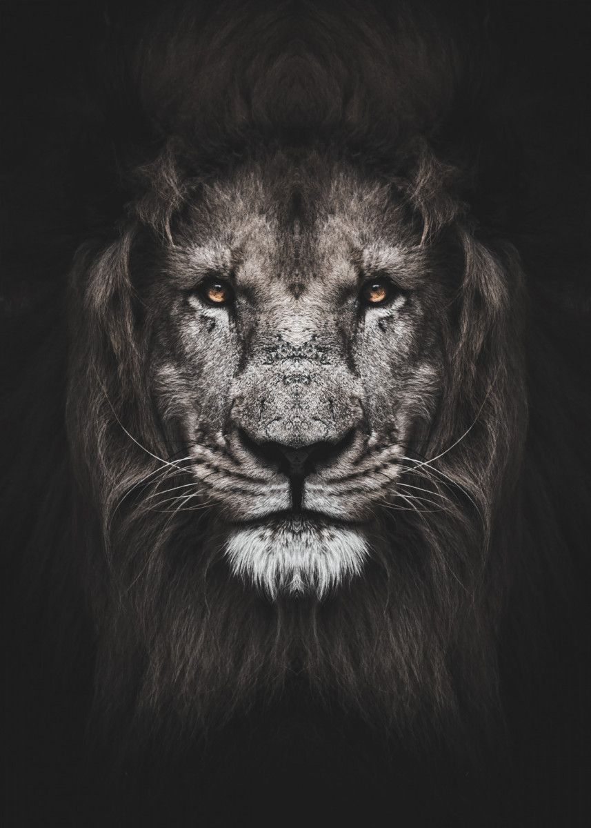 Wild Lion Face Poster Poster By Mk Studio Displate Black And White Lion Lion Poster Wild Lion