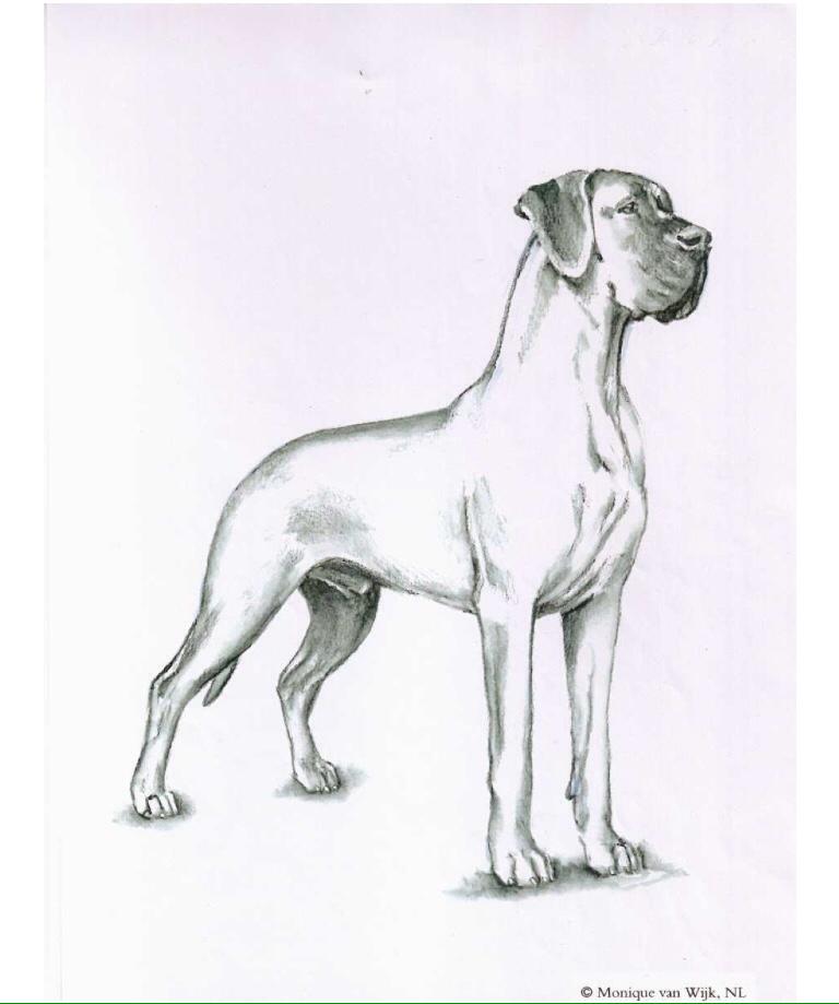 Tw Great Danes Dog Sketch Dog Anatomy Easy Animal Drawings