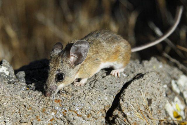 Wacky Ways to Keep Mice Away   Helpful hints   Keep mice