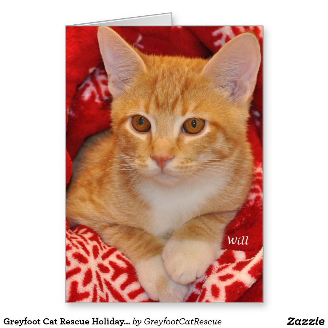 Greyfoot Cat Rescue Holiday Orange Tabby Card | CHRISTMAS CARDS ...