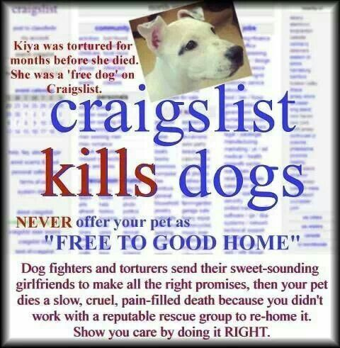 Craigslist Animals Please Make Aware Don T Post Animals Free On Craigslist With Images Pets Cruel Animal Abuse