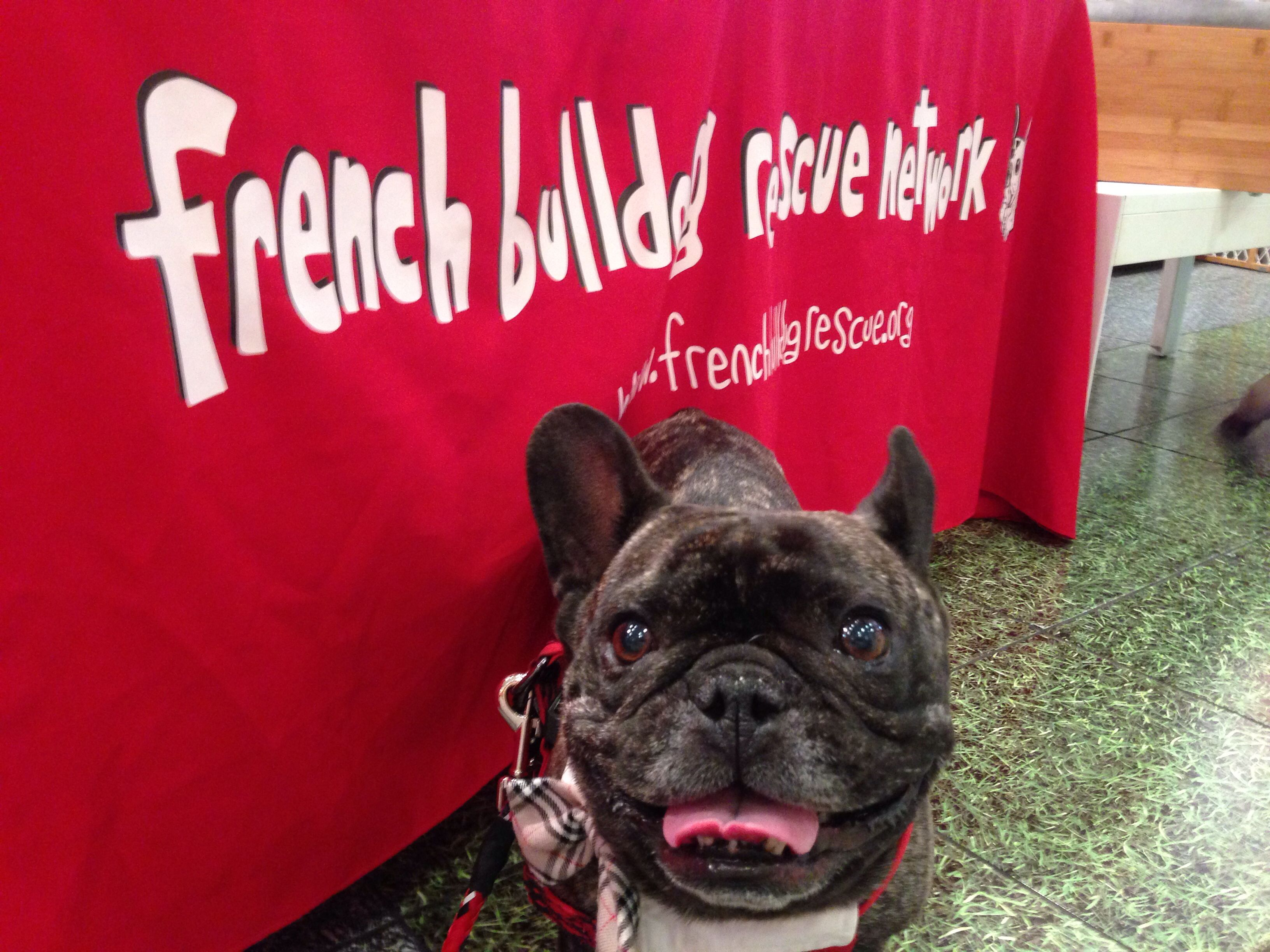 I Support The French Bulldog Rescue Network French Bulldog