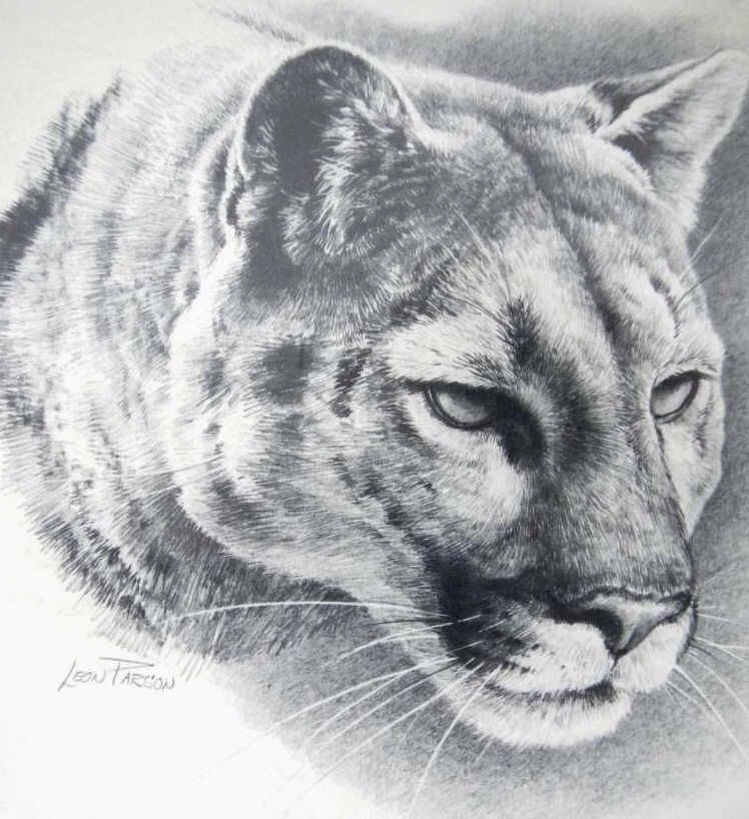 Mountain Lion With Images Lion Sketch Big Cats Art Animal