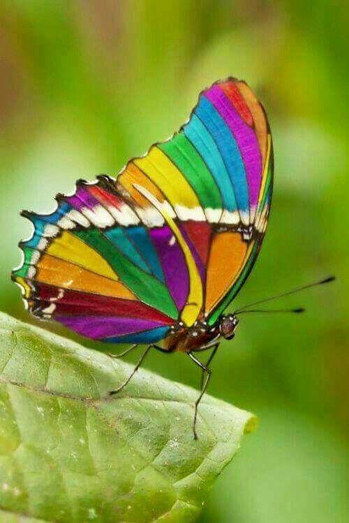 Transmutation..... à la recherche de la paix intérieure ..... ( 4 ) - Page 15 A0477f831747646081f31856f59e9e5a